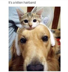funny-animal-picdump-of-the-day-105-02