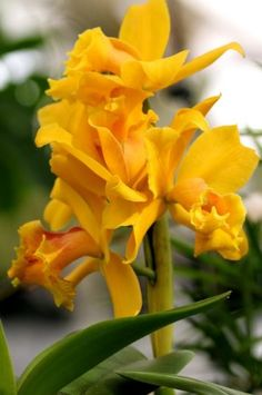 370 Best Yellow Flowers Orange Flowers For Your Garden Images