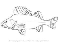 Learn How to Draw a Brown Trout (Fishes) Step by Step