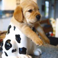 Lol... cute cookie!