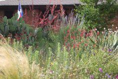 Rock-Oak-Deer: A Visit to Plano Prairie Garden
