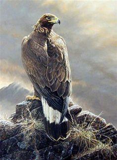 Alan M Hunt - Birds of Prey Paintings - Golden Eagle