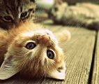 7 Crazy Things Cats Do That You Won't Believe