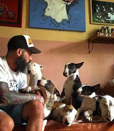 Sweet pile of bull terriers