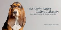 dogs with glasses are cute......basset hounds with glasses are smart
