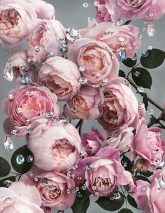 Swarovski S/S 2013 Ad Campaign Photographer: Nick Knight Design Seeds, Jewelry Ads, Hue Color, Pink Roses, Tea Roses, Pink Flowers, Color Inspiration, Pretty In Pink, Beautiful Flowers