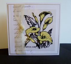 Lilies on Acetate