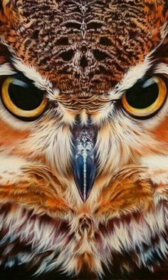 Barn Owl In A Tree Birds Owls Nature And Animal Photography Animal Barn Birds Nature Owl Owls Photog Owl Bird, Bird Art, Pet Birds, Angry Birds, Flying Birds, Birds 2, Owl Photos, Owl Pictures, Beautiful Owl