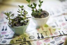 I love little plants in tea cups lately
