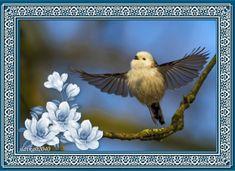 Bird, Animals, Animales, Animaux, Birds, Animal, Birdwatching, Animais