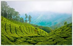The idyllic hill station Munnar – famous for its tea estates, exotic lush greenery and craggy peaks, is located in the Western Ghats and is one of the best places to visit in Kerala. Munnar, Tourist Places, Places To Travel, Stage Yoga, Kerala India, South India, South Africa, Kerala Tourism, Tourism India