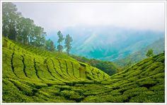 Munnar, Kerala (India)