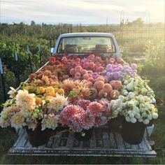 This bunch of flowers on a truck is the perfect floral inspiration. Bunch Of Flowers, My Flower, Pretty Flowers, Flower Truck, Fresh Flowers, Photos Of Flowers, Prettiest Flowers, Potted Flowers, Wall Of Flowers