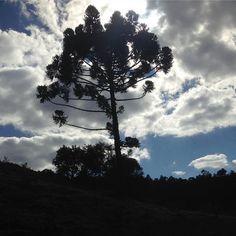 Pelo caminho do ouro através da estrada real... #araucaria #caminhodoouro #estradareal #cunha #asjoiasdarainhaviajam #eufizasuajoia #brasiladentro #restaurarenergias #joiasslow #slowfashion