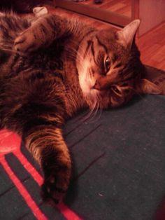 Смотрите это мой кот сенюля
