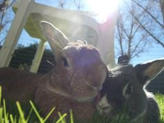 Bunny Gives Her Friend a Sloppy Kiss -  August 12, 2011