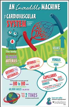 Fun facts for kids about the cardiovascular system, an incredible machine in the human body.