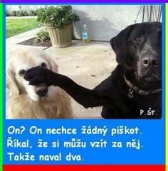 Dám si piškotek :-)   Vtipné obrázky - obrázky.vysmátej.cz