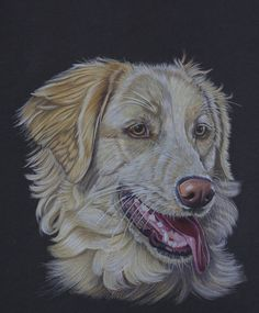 Sarahharas07 on deviantART.  Colored Pencil