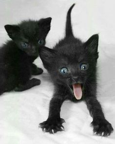 Little black kittens