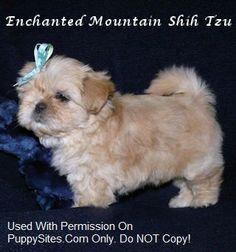 Enchanted Mountain Shih Tzu