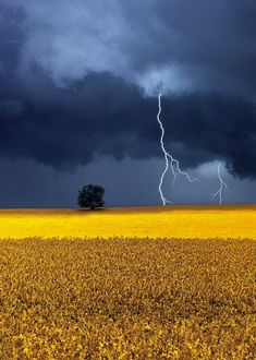 Mother nature's fury: 30 of the most impressive lightning photos i've ever seen Lightning Photography, Nature Photography, Rapeseed Field, Lightning Photos, Canola Field, Thunder And Lightning, Guache, Wow Art, Dark Skies