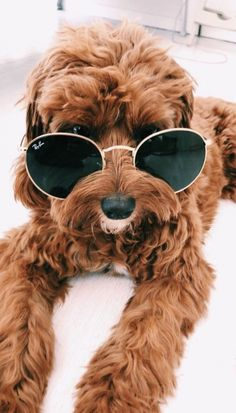 Watch funny and cute dogs and puppies as they are the most lovable pets in the world. Cute Dogs And Puppies, Little Puppies, I Love Dogs, Doggies, Teddy Bear Puppies, Shitzu Puppies, Mastiff Puppies, Fluffy Puppies, Terrier Puppies
