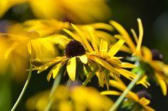 *Garten-Liebe*: September-Garten...