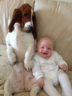 What you laughing at? #toocute #basset #baby