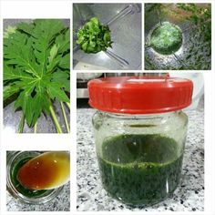 Papaya leaves juice cures dengue fever. Positively increase blood  platelet counts