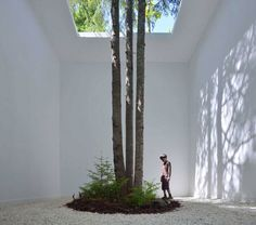 Stories On Design: Trees In Interiors, Curated by Yellowtrace.