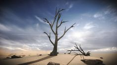 FREE 3 Dead Trees Sample Models – free 3D model ready for CG projects. Available formats: Previews