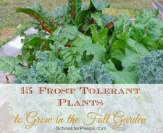 15 Frost Tolerant Vegetables to Grow in the Fall Garden - SchneiderPeesp - Your garden doesn't have to end just because winter is here.  Here are 15 frost tolerant plants - some are tolerant to 15 degrees fahrenheit.