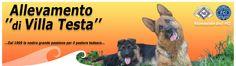 Allevamento di Villa Testa, una grande passione per il pastore tedesco. Cuccioli di pastore tedesco, pensione per cani, corsi d'addestramento e di educazione, Pet Therapy