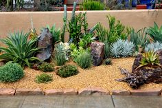 Mediterranean Landscape/Yard with Blue Chalk Fingers Succulent, Agave Desmettiana Varigata, Fence, Raised beds
