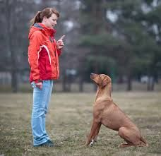 How to Teach a Dog to Sit - and Stay!