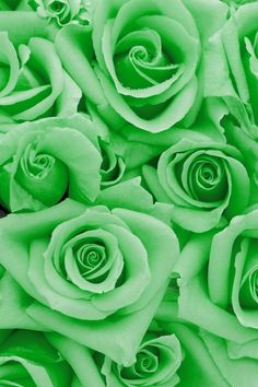 Ideas flowers blue photography for 2019 Turquoise Wallpaper, Green Wallpaper, Rose Wallpaper, Iphone Wallpaper, Trendy Wallpaper, Verde Aqua, Verde Jade, Exotic Flowers, Beautiful Flowers
