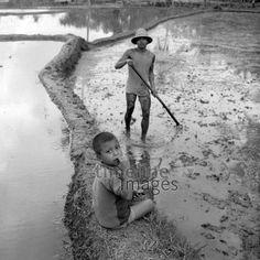 Zwei Jungen in einem Reisfeld auf Bali, 1974 hwh089/Timeline Images  #70er #70s #colorphotography #retro #nostalgic #vintage #historisch #historical #indonesia #indonesien #bali #work #arbeitswelt #Ernte #field #Feld #Feldarbeit #child #children #Kind #Kinder #agriculture #Landwirtschaft #harvest #harvesting #riceharvest #Reis #rice #Reisernte #Reisfeld #riceplant #Reispflanze #Reispflanzen #bewässern #water #wasser #fieldwork #werkzeug #tool #boy #junge #matsch #mud #schlamm #schlammig