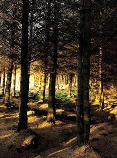 Woodlands in Snowdonia