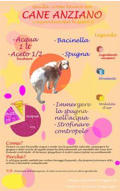 Crazy and Sweet Pet: Come lavare un cane anziano : infografica!