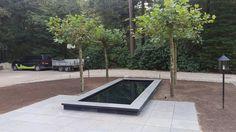 Strakke spiegelvijver met dakplatanen. Rooftop Pool, Rooftops, Green Walls, Pools, Outdoor Gardens, Garden Design, Dreams, Plants, Everything