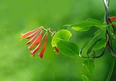 28 Common Flowers That Attract Hummingbirds (Native, Easy To Grow) - Bird Watching HQ Hummingbird Habitat, Hummingbird Flowers, Hummingbird Garden, Backyard Plants, Backyard Birds, Flowers That Attract Hummingbirds, Attracting Hummingbirds, High Country Gardens, Hanging Bird Feeders