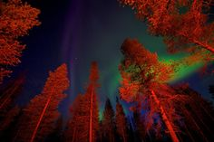 the revenge shared by lumos ♡ on We Heart It Northern Lights Holidays, Large Balloons, Sequoia National Park, Places Around The World, Looking Up, Night Skies, That Look, Nature, Painting