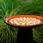 Candlelit glow    Float tea candles in a water-filled birdbath to create a mini firepit. On windy days, set tea lights in clear glass votive holders in a dry birdbath so they won't wobble.