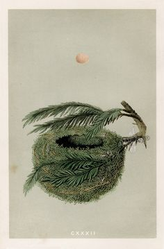 Orpen Morris: A Natural History of the Nests & Eggs of British Birds. 1853.