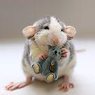 Rat photos by Ellen van Deelen. See more at http://www.redbubble.com/people/ellen/collections/85838-my-rat-photos