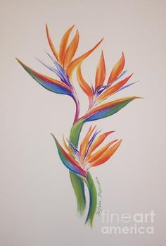 Watercolor drawing, watercolor paintings, paradise painting, bird of paradi Bird Of Paradise Tattoo, Birds Of Paradise Flower, Watercolor Bird, Watercolor Drawing, Watercolor Paintings, Watercolor Tattoos, Painting Tattoo, Paradise Painting, Henne Tattoo
