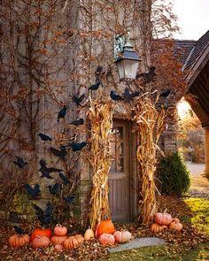 Pumpkin Season More