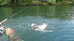 FISHING ! Вываживание ленка без подмотки катушкой