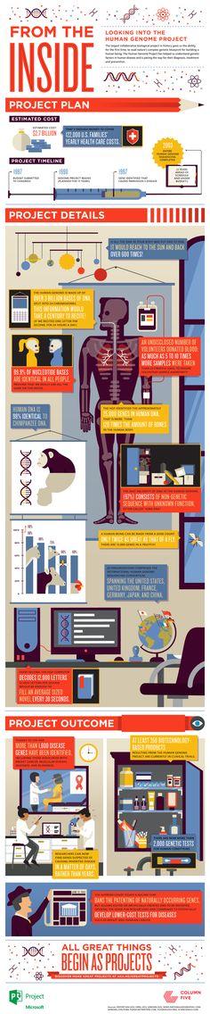 Terminados los nuevos apuntes de Biotecnología para el próximo curso. ¡A celebrarlo!, Human Genome Project infographic